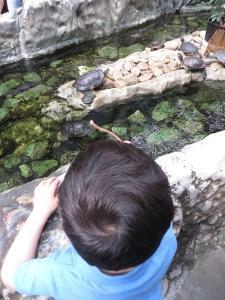 primera vez zoo
